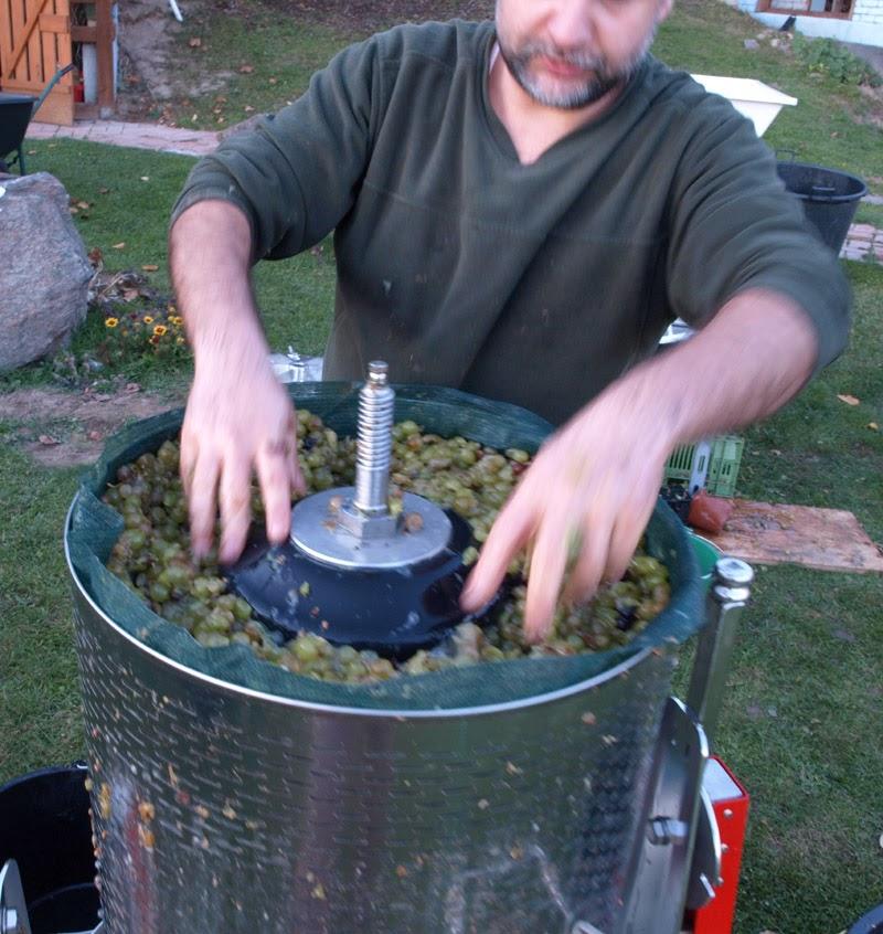 Winiarze Dolnej Wisły praca